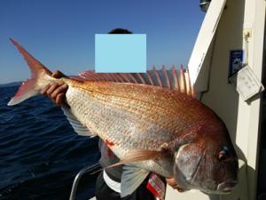 84cm真鯛