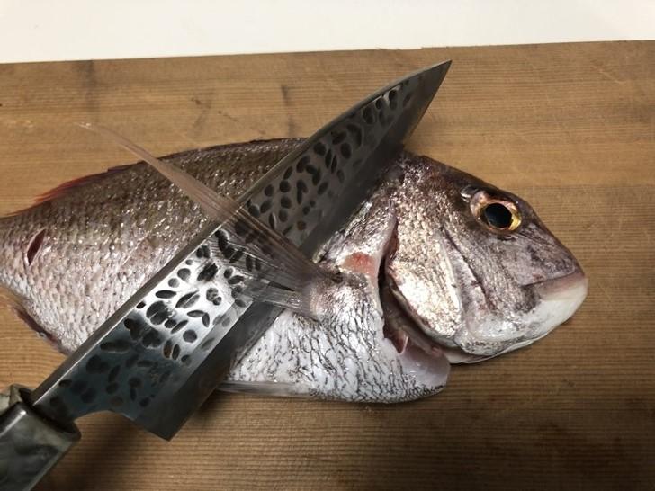 鯛の捌き方1