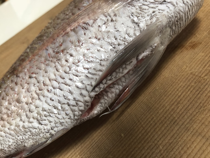 鯛の捌き方3