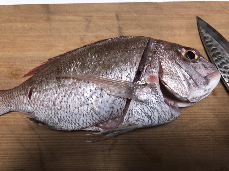鯛の捌き方2