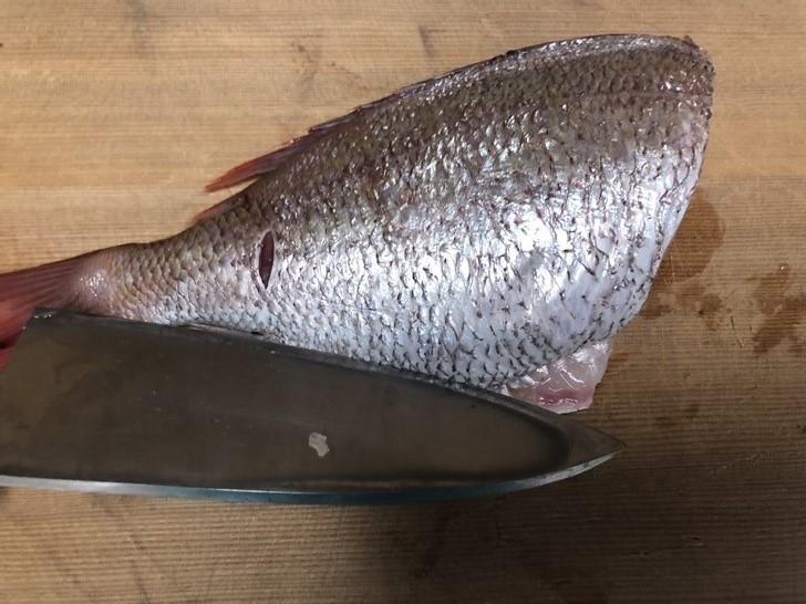 鯛の捌き方4