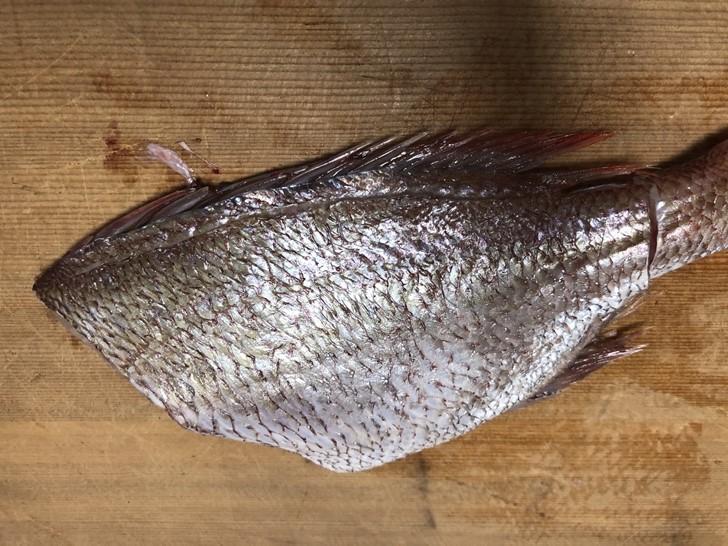鯛の捌き方9