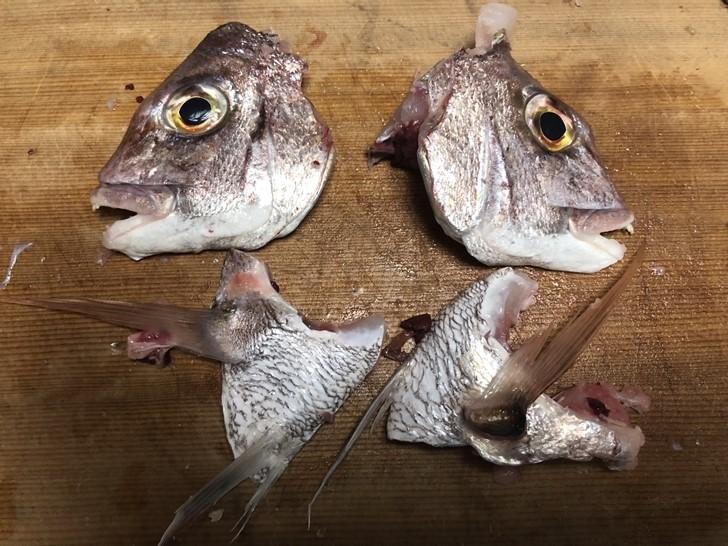 真鯛の頭の捌き方4