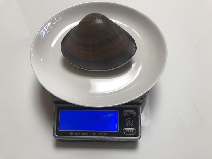 湘南はまぐりサイズ計測3